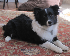 """""""Cayden"""" - Adopted May, 2011"""