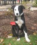 """Josie"" - Adopted December, 2008"